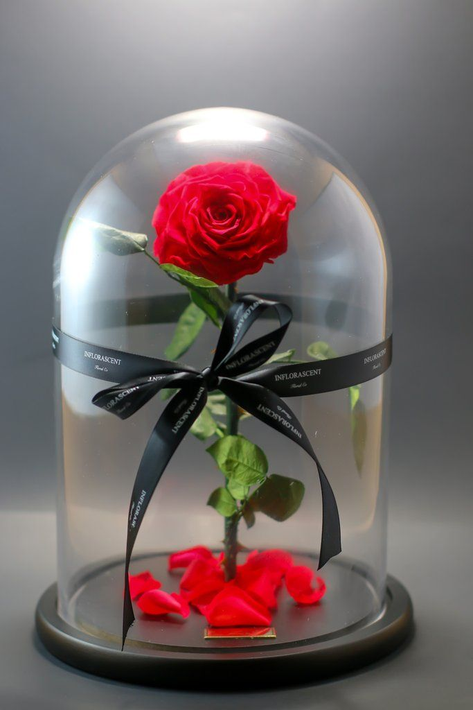 Beauty And The Beast Rose That Lasts A Year In Gl Dome Beautiful Arrangement