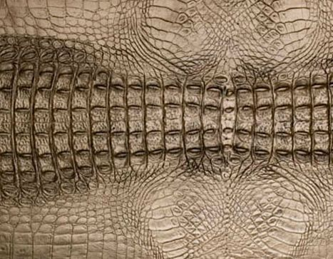 Crocodile Skin Drawing Inspiration From Crocodile