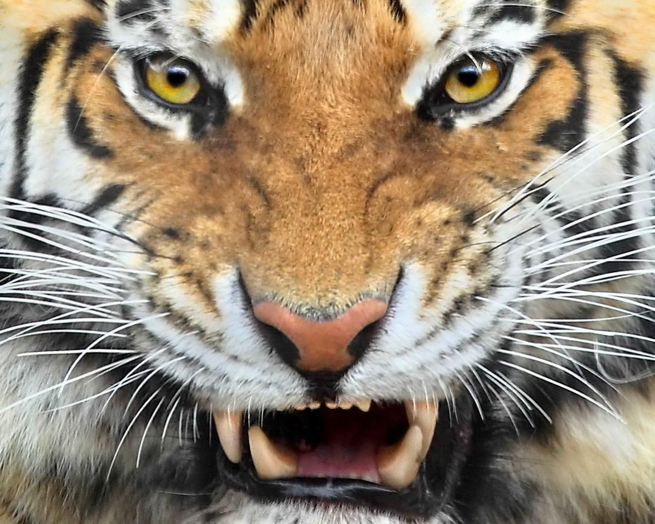 dangerous animals wallpapers | all wallpapers | pinterest | animal