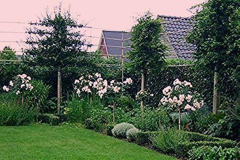 Photo of Landscape Focused: landscape, garden design ideas