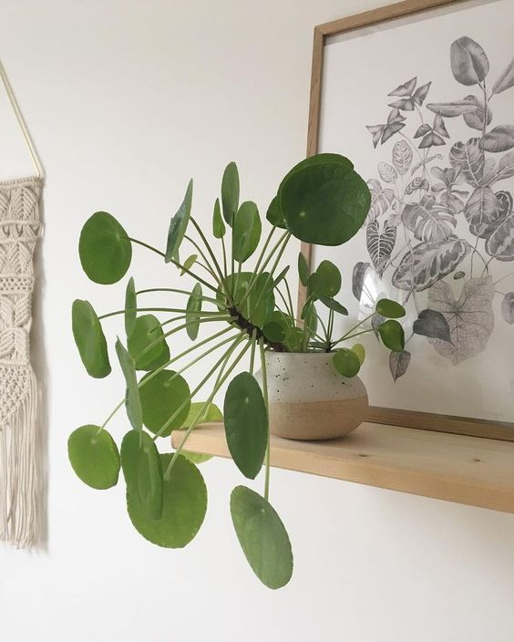 49 BEST HANGING PLANTS IN HOME DECOR; Hanging Plants; Home ...