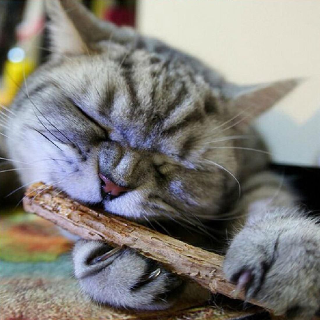 2PCS Cat Cleaning Teeth Pure Natural Catnip Pet Cat Molar