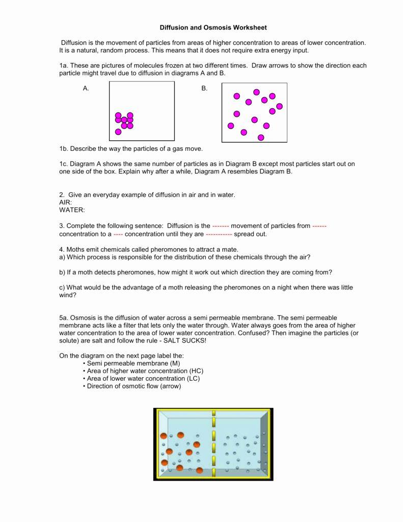 Diffusion and Osmosis Worksheet Beautiful Diffusion and