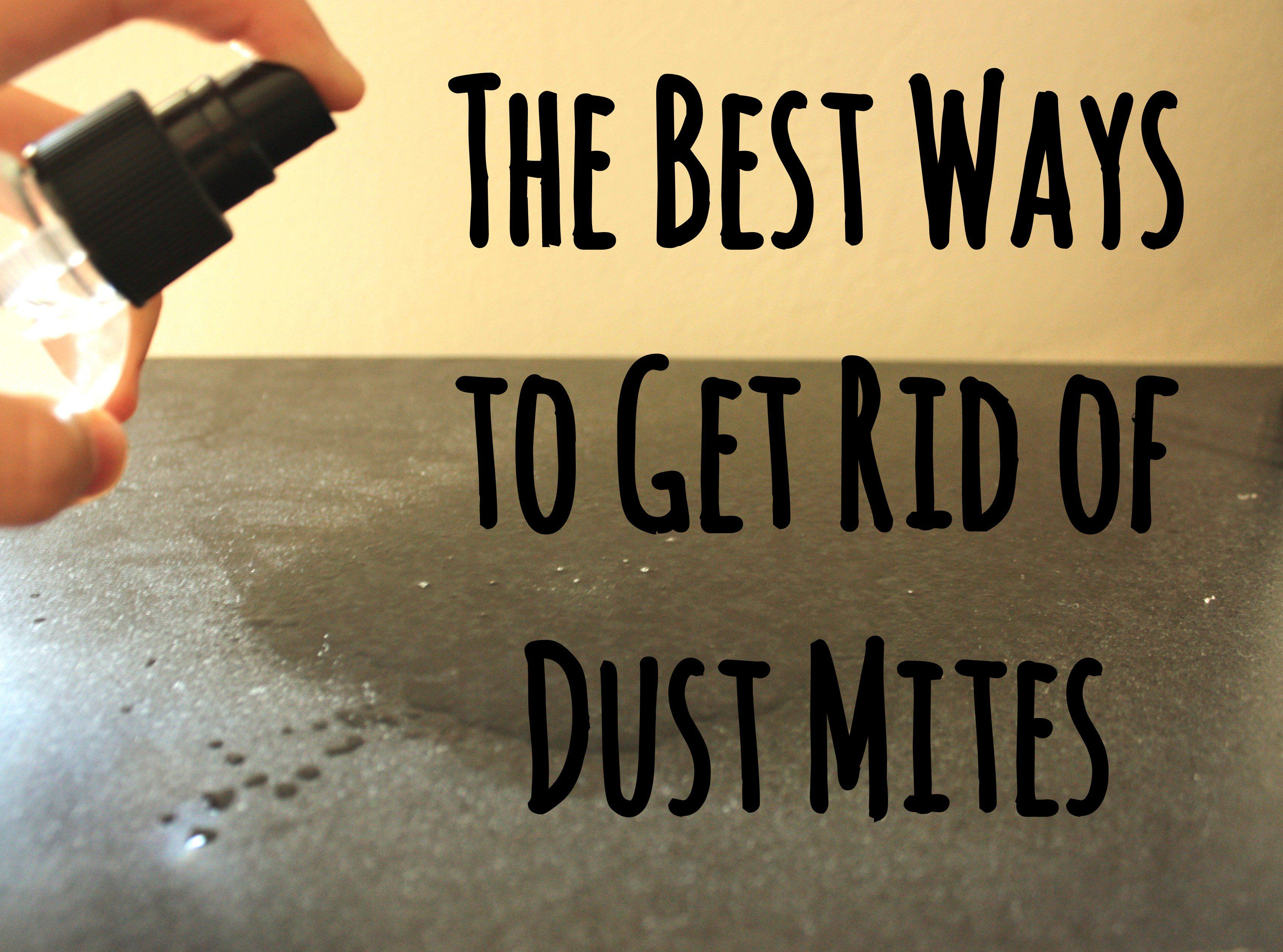 12 Guaranteed Ways to Get Rid of Dust Mites in Your House