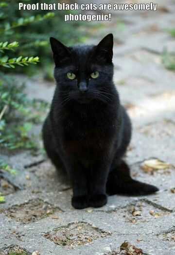 Pin By Joanne Lieser On Animals Cute Cats Black Cat Black Cats Rock