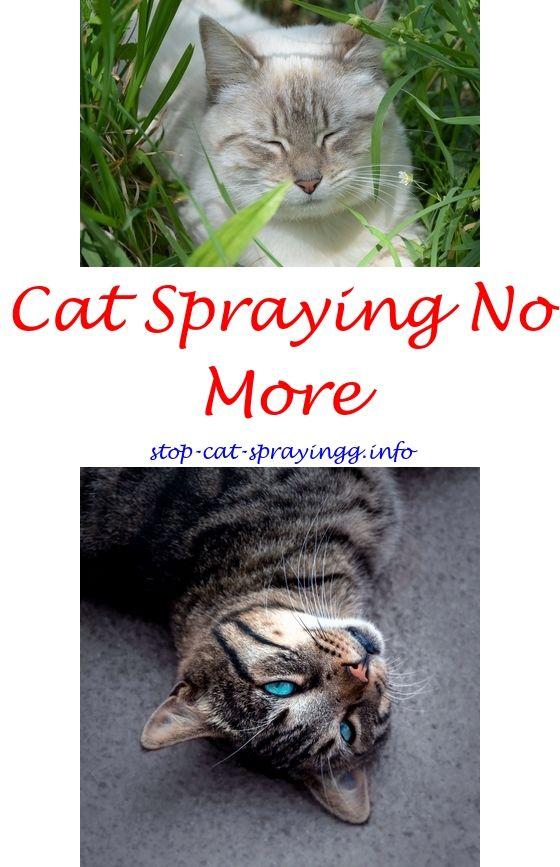 Cat Pee Spray   Pinterest