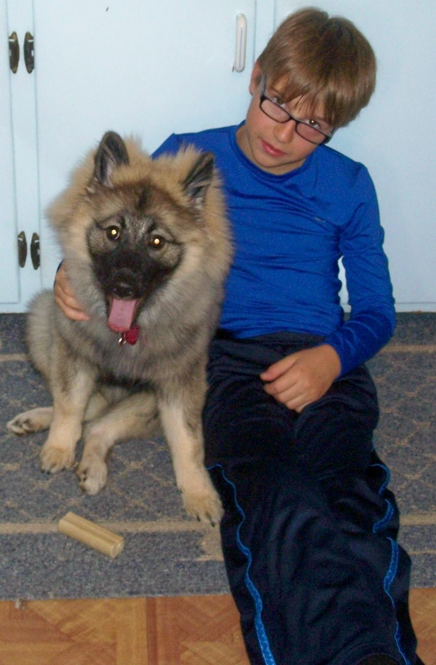 Keeya 5 months old with Mike   Keeshond dog, Keeshond, 5 ...