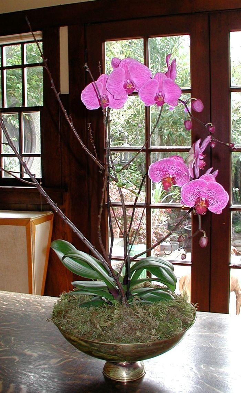 Zimmerpflanzen Deko Ideen Orchideen Pflegen Wunderschöne Blüten