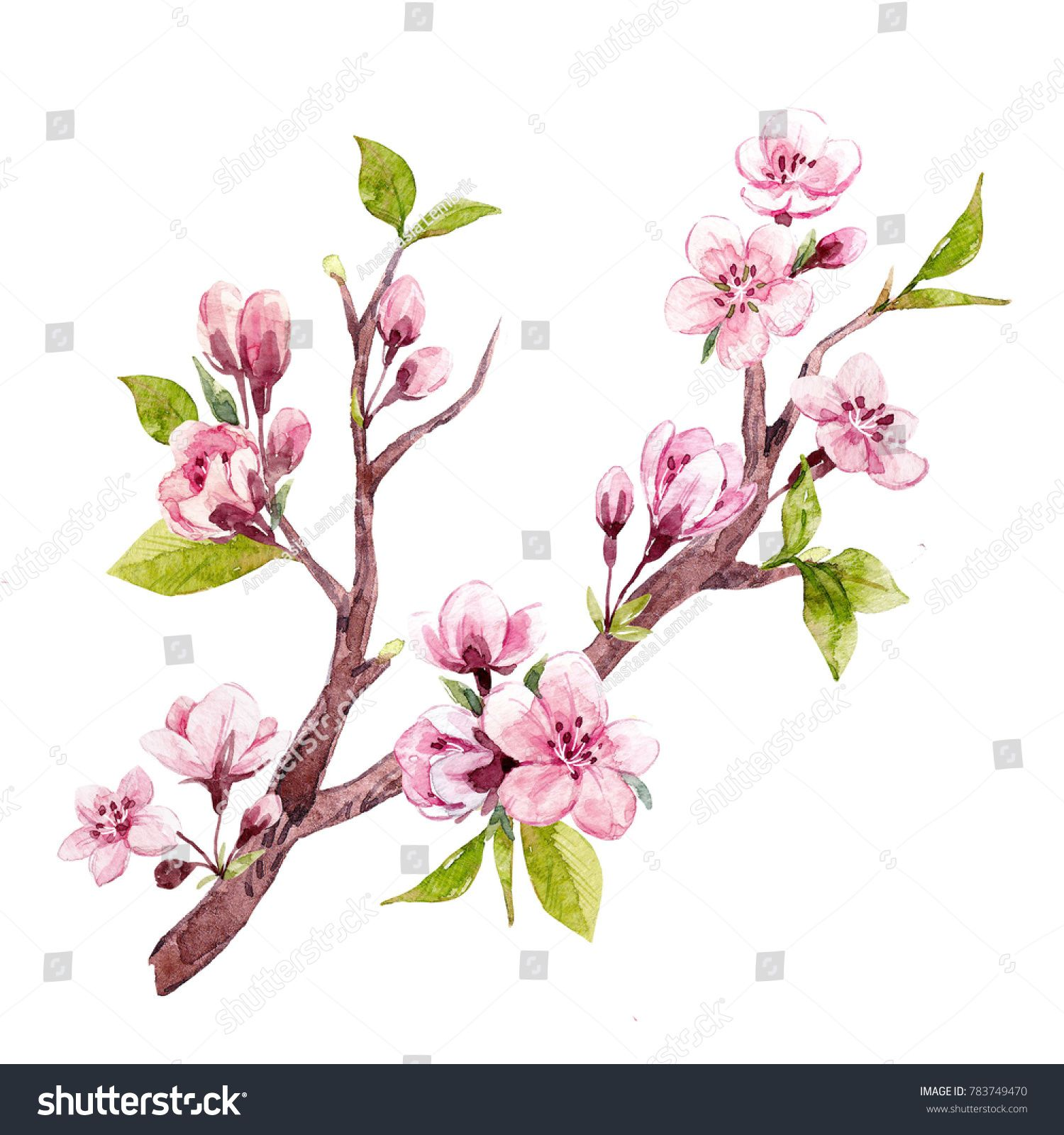 Watercolor Drawing Isolated Tree Branches With Sakura Flowers Cherry Blossoms And Young Green Leaves Set Isola Flower Drawing Leaf Drawing Watercolor Drawing