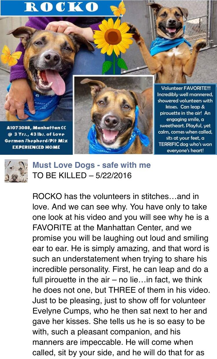 SAFE❤ ❤ 5 23 16 BY RESCUE DOGS ROCK NYC❤ THANK YOU