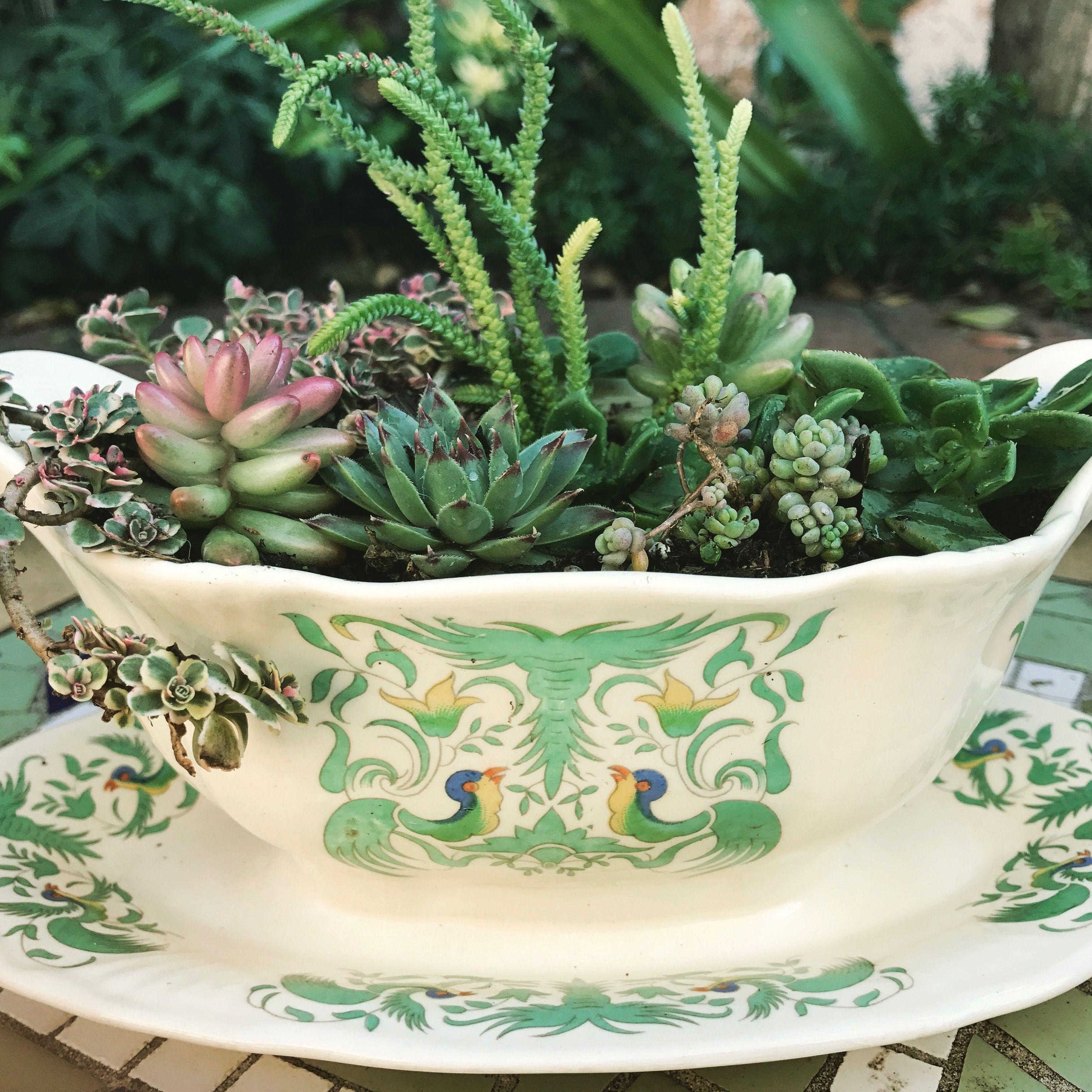 Mini Succulent Garden In Yard Sale Vintage Dish Succulents Teacup Gardens Mini Succulents
