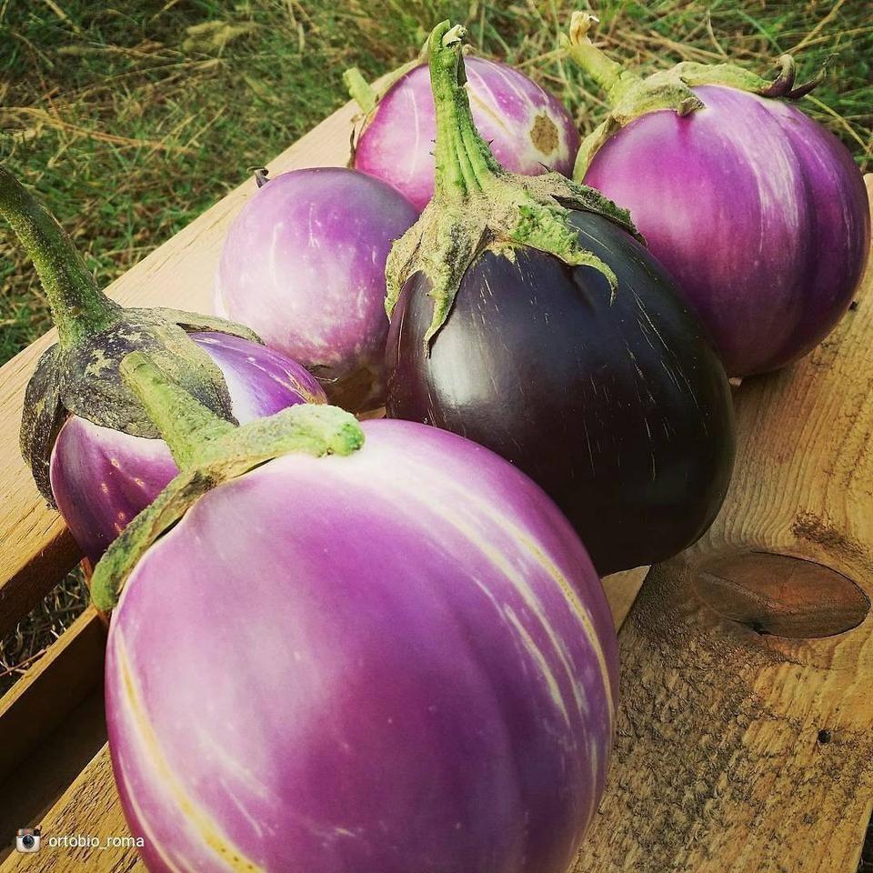 Eggplant - Round Mauve | Eggplant seeds, Eggplant, Grow your own food