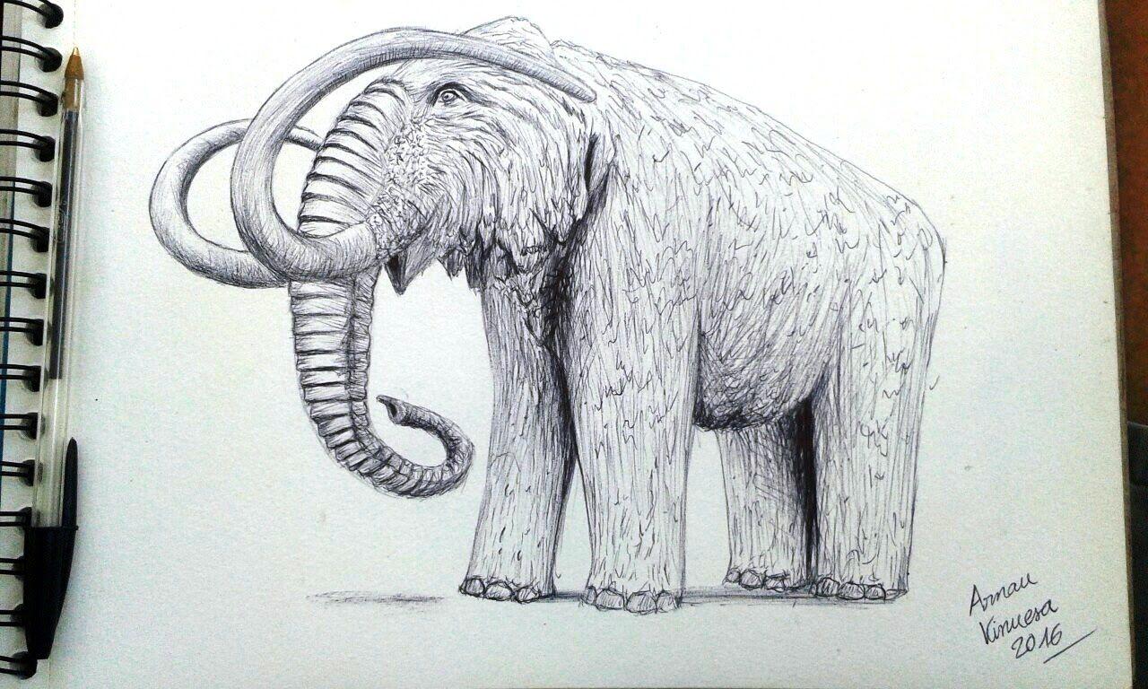 Drawing A Mammoth Dibujando Un Mamut Drawings My Drawings Art