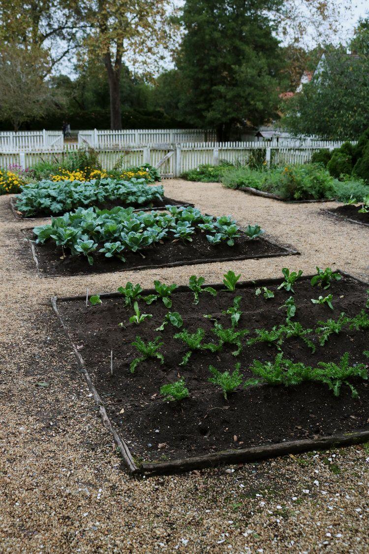 Pin On Vegetable Gardens Layout Design Plan Gardening