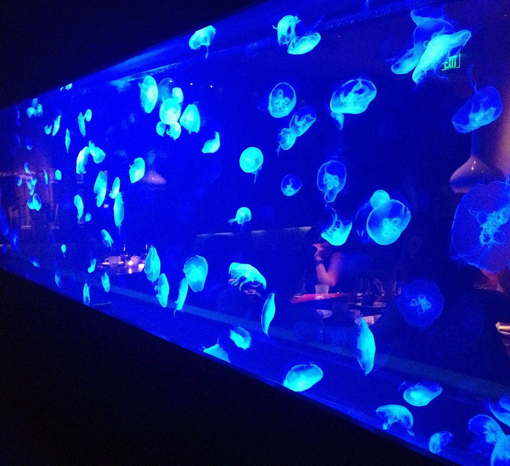 W Fort Lauderdale Steak 954. Amazing Jelly Fish tank ...