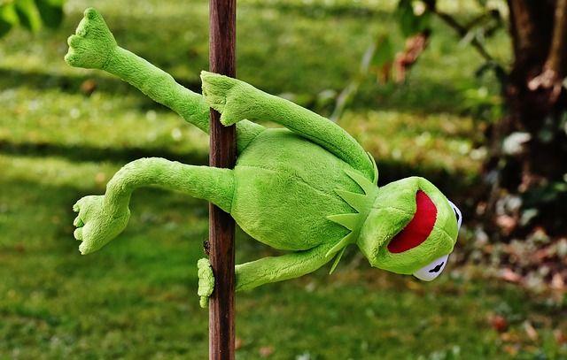 Pin On Kermit My Darling