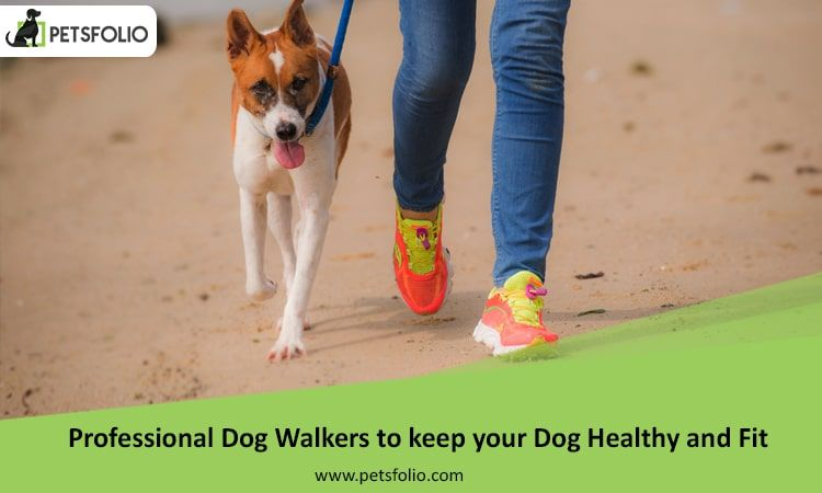 Professional Dog Walkers To Keep Your Dog Healthy And Fit Dog Walker Dog Walking Services Dog Benefits