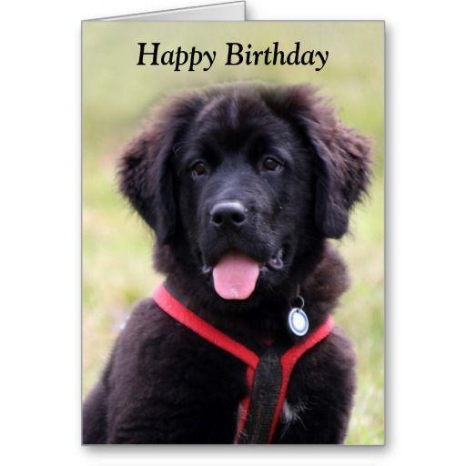 Newfoundland dog puppy cute photo birthday card   Zazzle ...