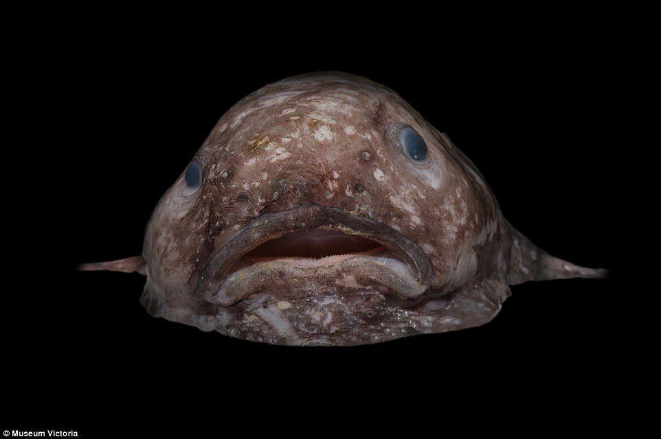 dating fish australia