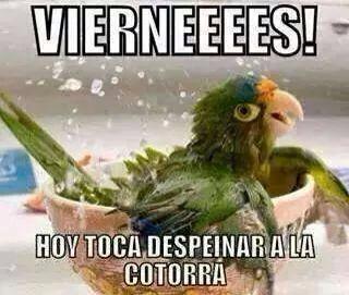 Memes Humor Viernes Memes Mexicanos Divertidos Memes Espanol Graciosos Cotorro