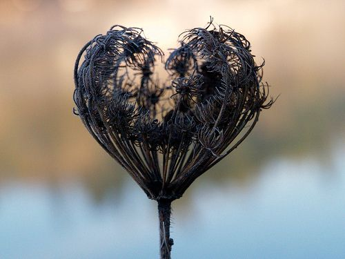 Black heart dried floral. This was hard to classify, as it's beautiful, natural, and evocative.
