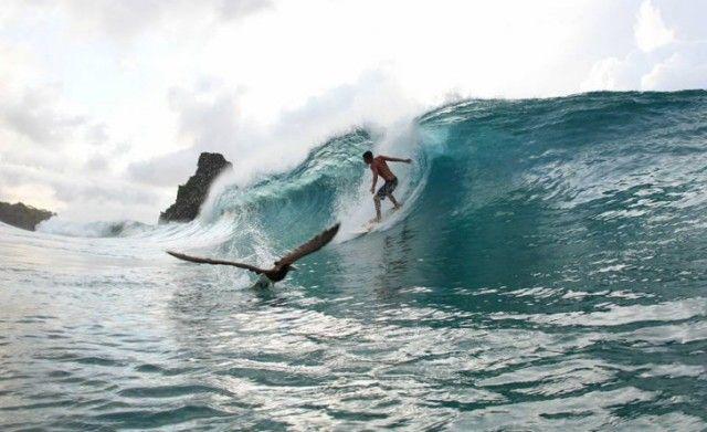 Encontro entre surfista e pássaro marinho em Fernando de Noronha.