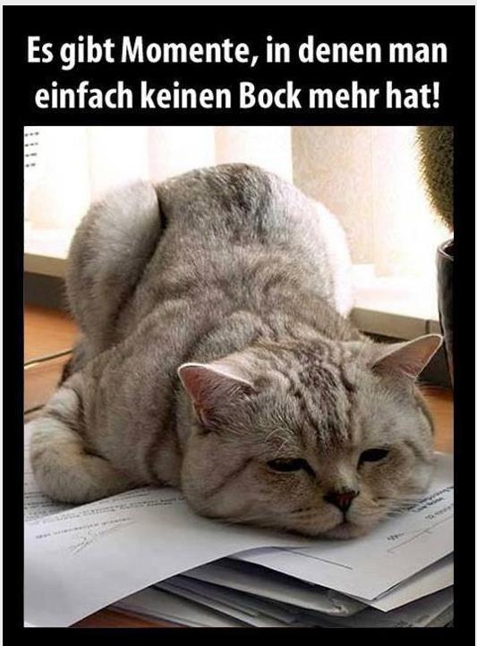 ha ha heute schon gelacht lustige spr che witze und bilder katzen katzen lustige katzen. Black Bedroom Furniture Sets. Home Design Ideas