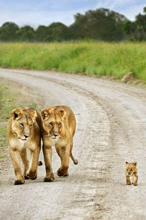 Les 25 photos les plus mignonnes qui reflètent l'amour parental chez les animaux Plus