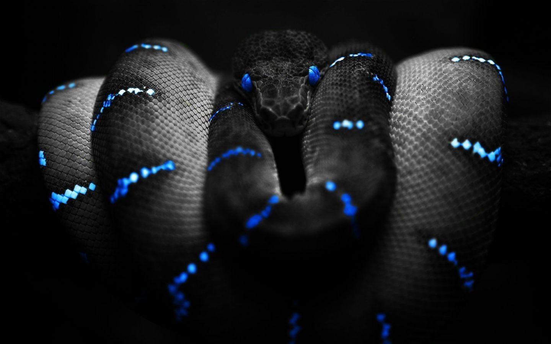 Imgur Com Snake Wallpaper Deadly Animals Snake Images