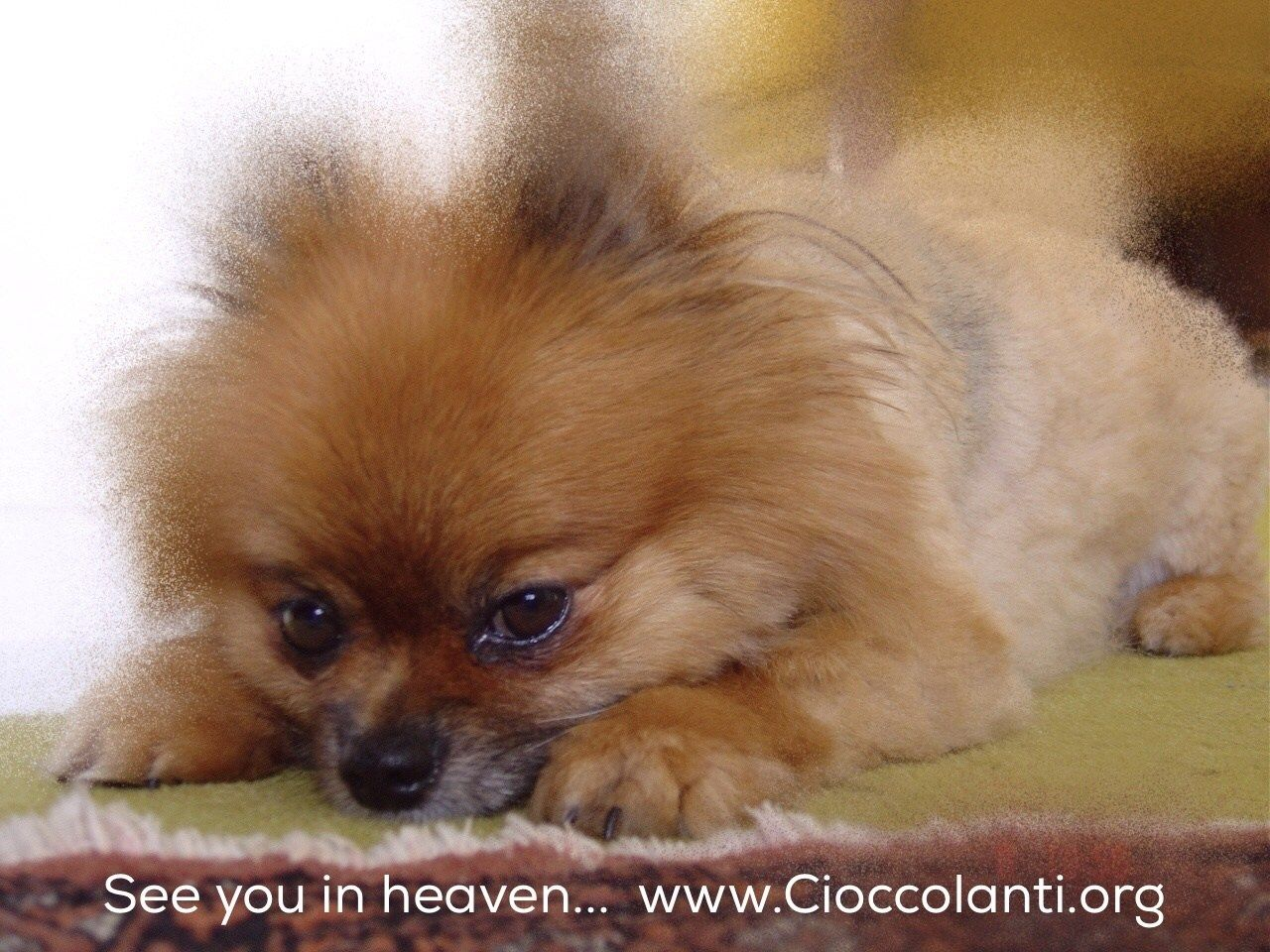 Steve Cioccolanti's answer to Where do pets go when they