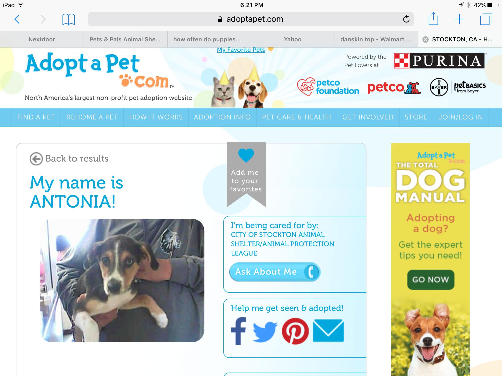 Pin by Karen Teasdale on Dog Petco, Pet adoption, Dogs