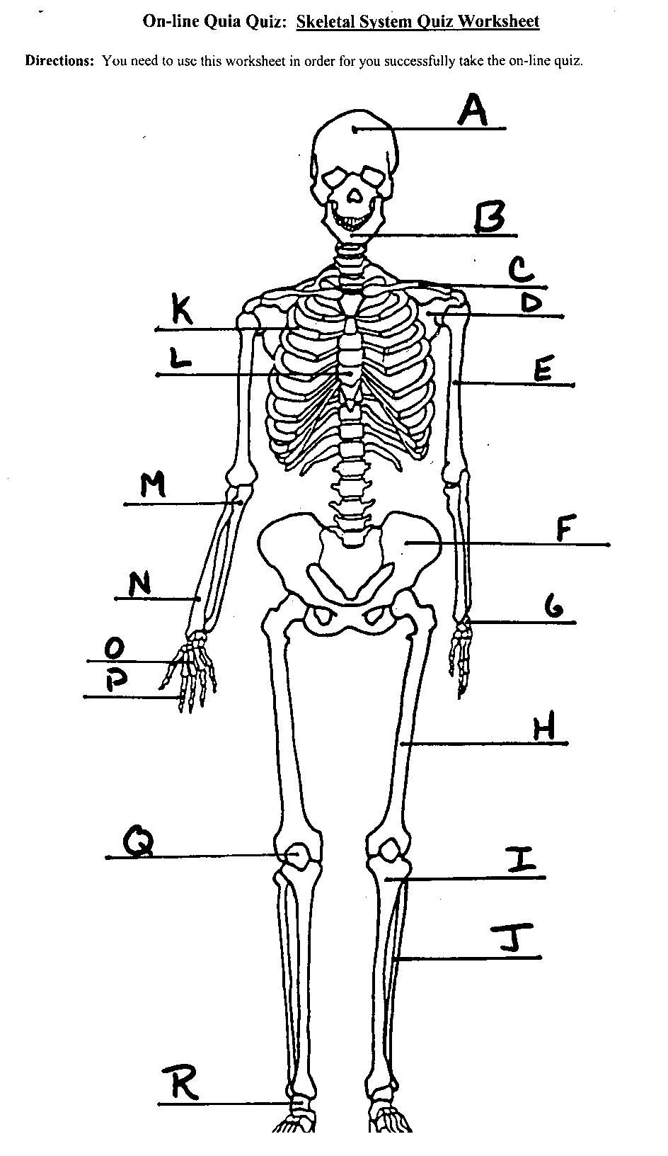 Worksheets Skeletal System Worksheet Answers image result for skeletal system labeled human skeleton labeled