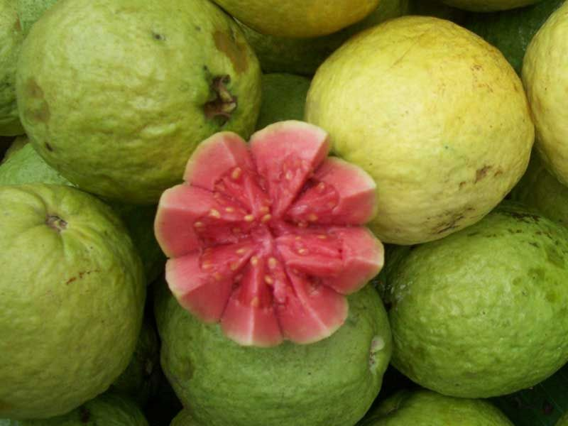 Brazilian Guava 30 Fruit Names English To Hindi Fruit Names A Z