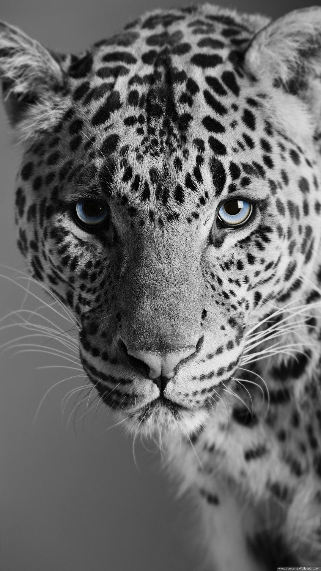 Leopard Lock Wild Animal Wallpaper Animals Black And White Animal Wallpaper