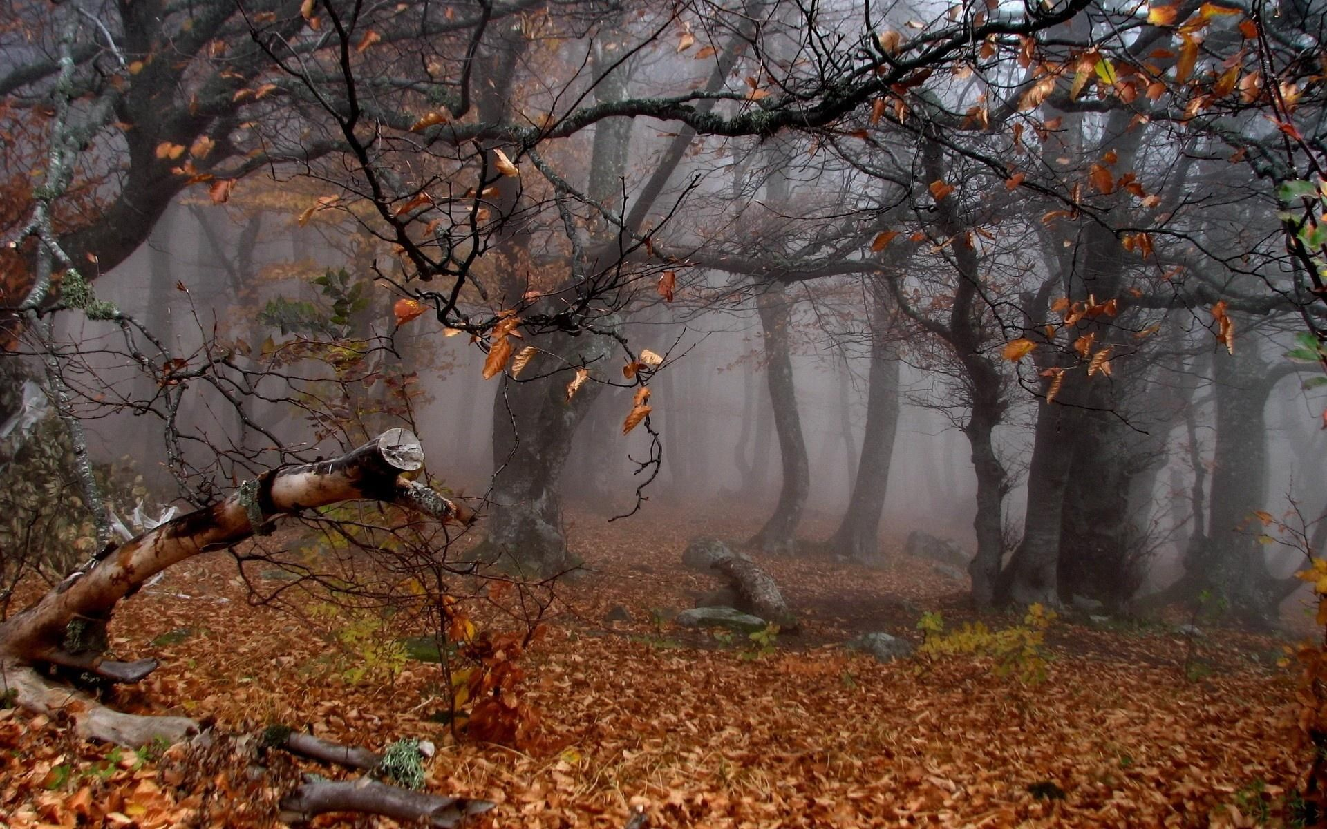 Nice Autumn S Twisted Trees Wallpaper