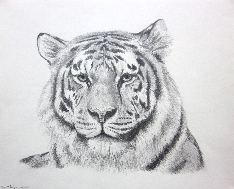 Tiger Drawing - Google Search | Drawing | Pinterest | Tiger Drawing