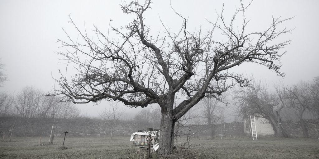 Wann Obstbäume Schneiden