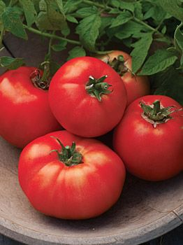 Tomato, Carmelita - Tomatoes at Cooksgarden.com