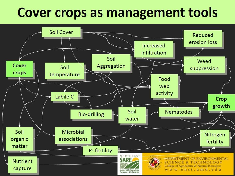 Mycorrhizae And Cover Crops No Till Vegetables
