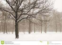 misty winter landscape - Google Search