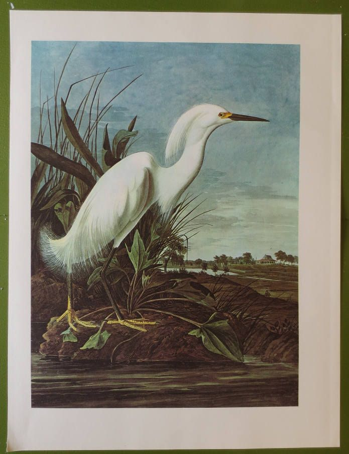 Vintage 1966 Book Plate Of Audubon Water Color Paintings Snowy