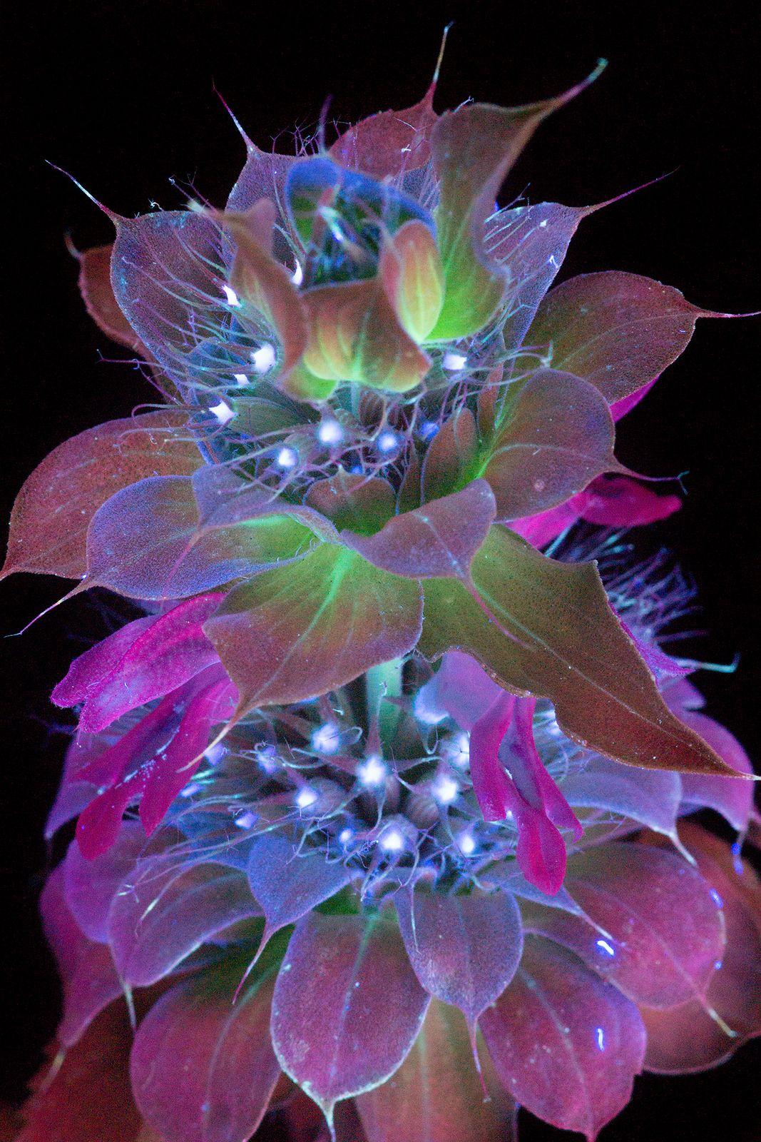 сорта самый волшебный цветок картинки нарва была