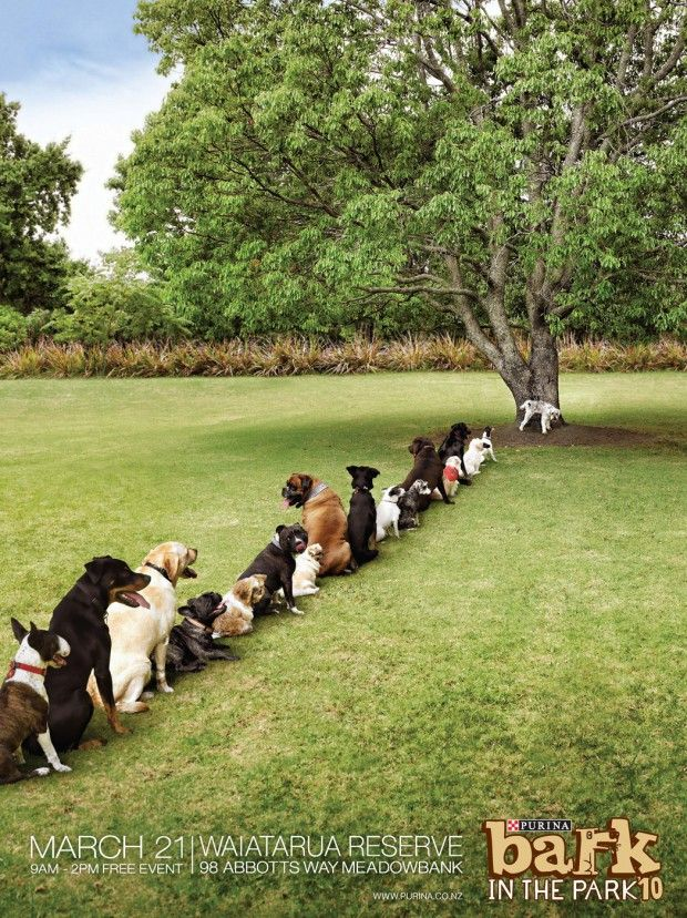 Ad of the Day: Purina Bark in the Park – Tree #funnyad #funny