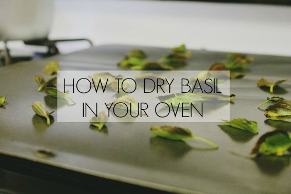 The Saltwater Cure: How To Dry Basil In Your Oven