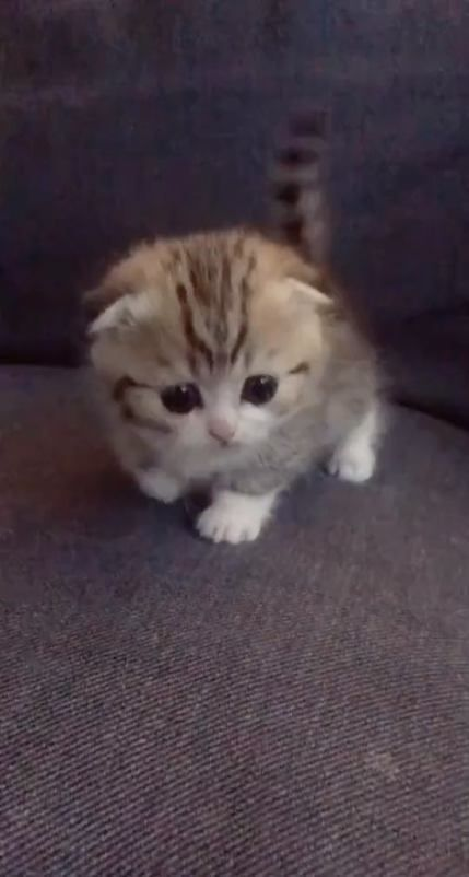 Pin By Ericvanesha On Cute Baby Kitties Cute Cats Cute Baby