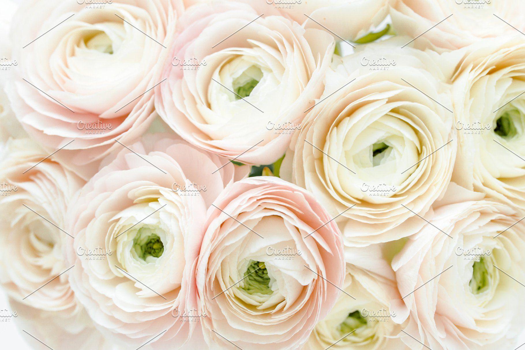 Bouquet Of Ranunculus Flower Texture Bouquet Landscaping Images
