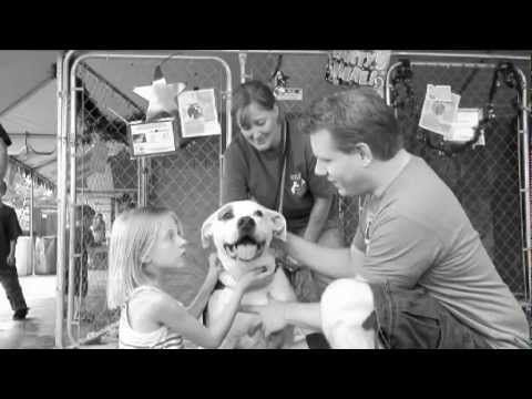 Beautiful Adoption Story From Best Friends With A Queen Soundtrack Inspiring Inspirational Pets Animal Rescue Stories Animal Society