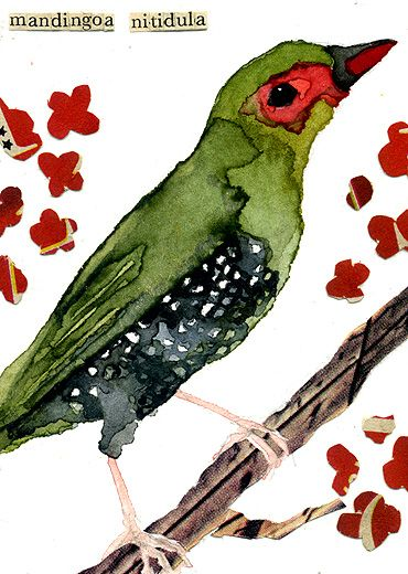 Green Finch--Carol's art is simply amazing!