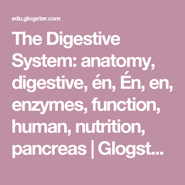 The Digestive System: anatomy, digestive, én, Én, en ...