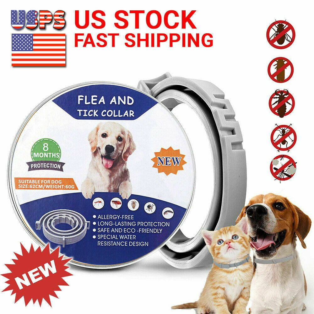 Pin On Cat Dog Flea Collars